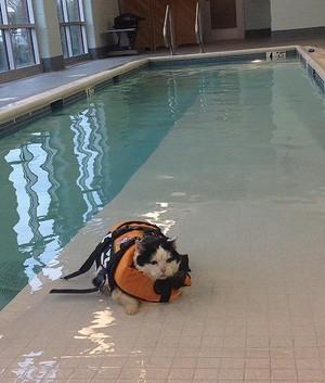 Water Aerobics For মার্জার
