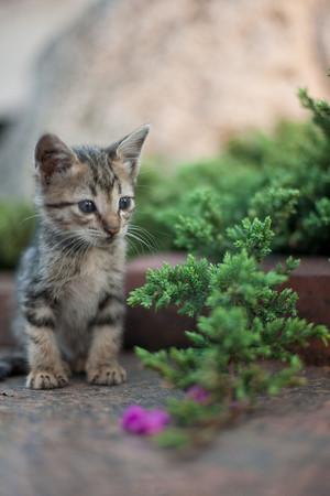 1200px Kitten in Rizal Park Manila