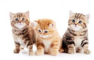 160237 425x272 Three little 고양이