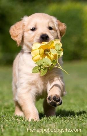 8a9d85afc3587ec126082715a0b55a5c  happy puppy puppy love