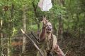 8x06 ~ The King, the Widow and Rick ~ Walker - the-walking-dead photo