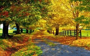 Autumn Hintergrund