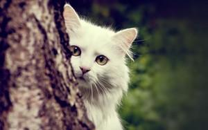 Beautiful ネコ