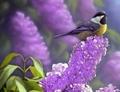 Bird - animals photo