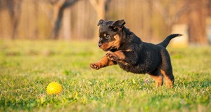Cesars Today Top Ten Puppy Tips