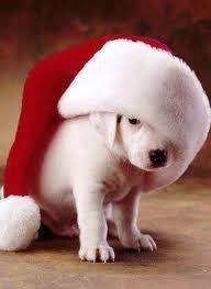 クリスマス themed 子犬 pics