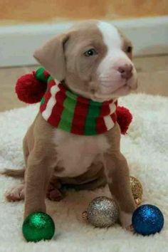 Christmas themed puppy pics