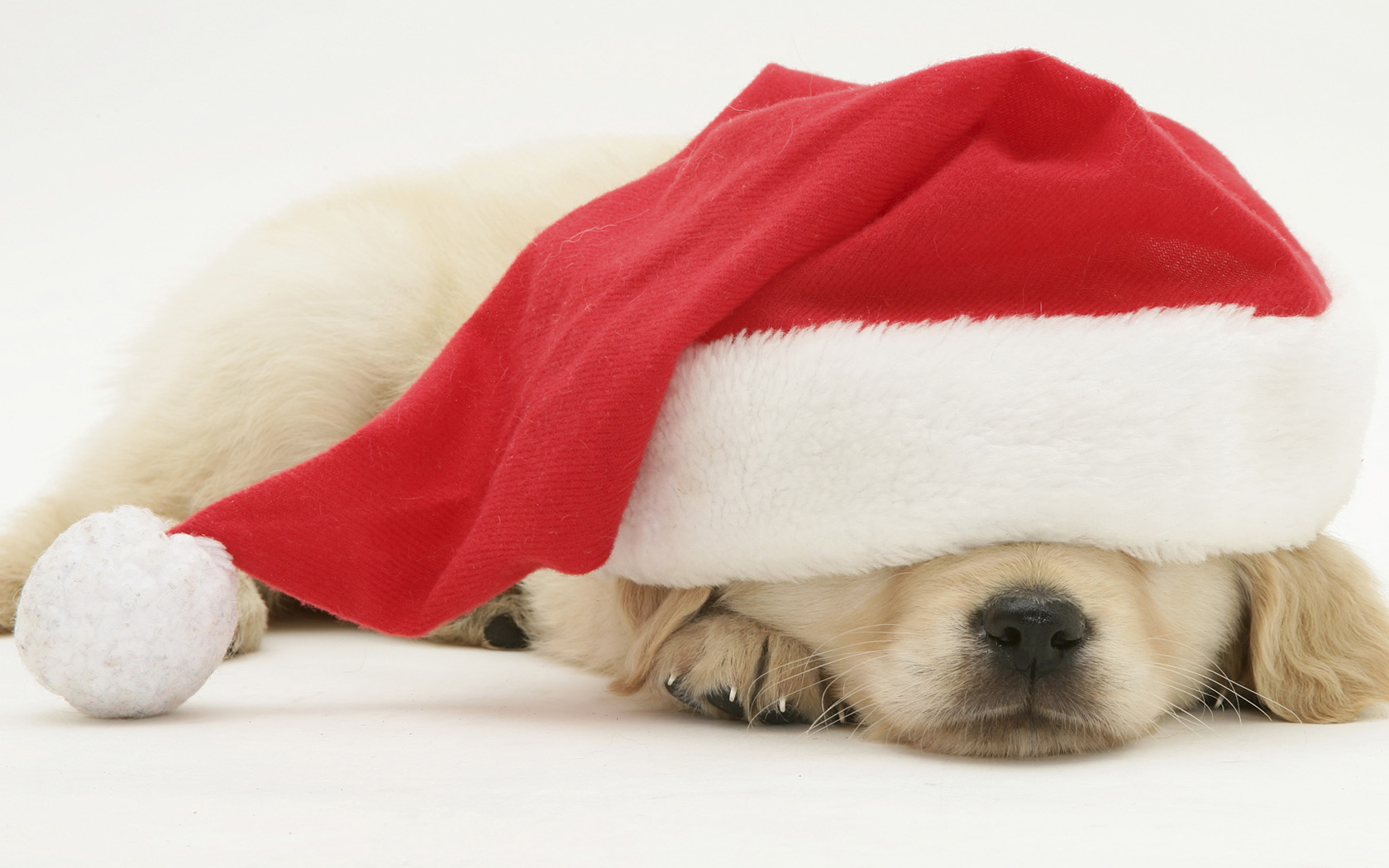 Cute Puppies Images Christmas Themed Puppy Pics Hd Wallpaper And