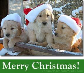 Christmas themed chiot pics