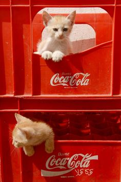 Coca Cola gattini