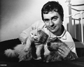 Dudley Moore And His Kitties  - cats photo