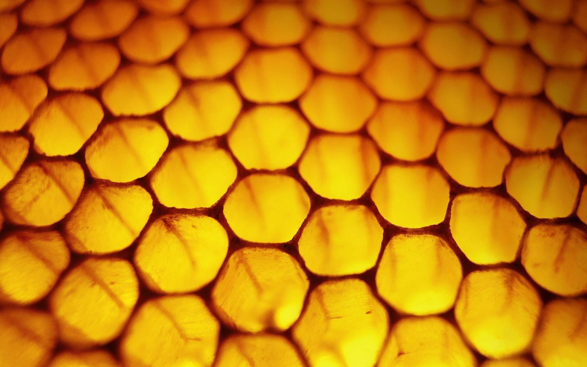 rayon de miel, nid d'abeille