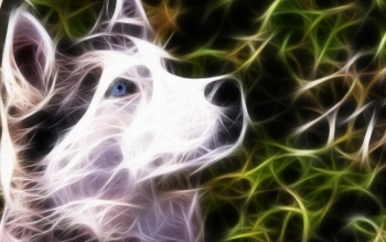 Siberian Huskies wallpaper titled Husky