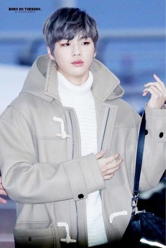 Wanna One 壁纸 called Kang Daniel💝