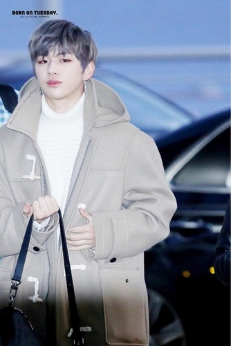 Wanna One wallpaper called Kang Daniel💝