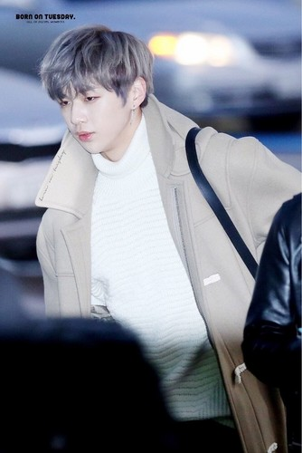 Wanna one images kang daniel hd wallpaper and background photos wanna one wallpaper entitled kang daniel stopboris Images