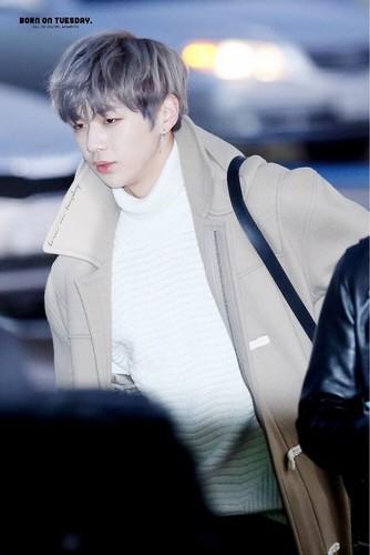 Wanna One wallpaper called Kang Daniel💝