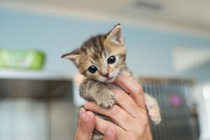 KittenRescue KittenCareHandbook
