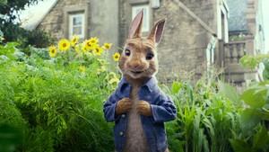 Peter Rabbit The Movie