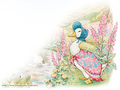 Peter Rabbit - yorkshire_rose wallpaper
