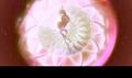 Pink bloom dreamix - the-winx-club fan art