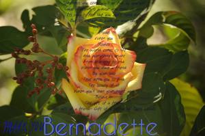 Thank Du Bernadette