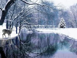 Winter Wonderland ☃️