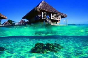 beautiful beaches bora bora underwater