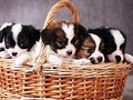 block photos available pets 383968525 cropped small  1170x877 q90 crop subsampling 2 upscale.jpg - puppies photo