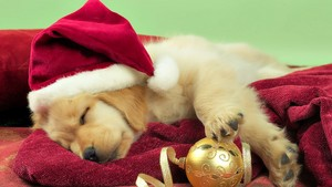 cute puppies christmas theme foto's