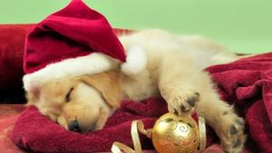 cute anak anjing natal theme foto