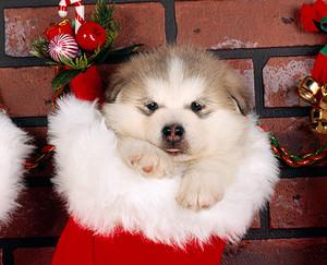 cute cachorrinhos natal theme fotografias