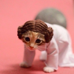 Kitten Dressed As Princess Leia