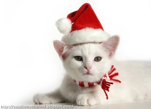 have a merry kitty christmas