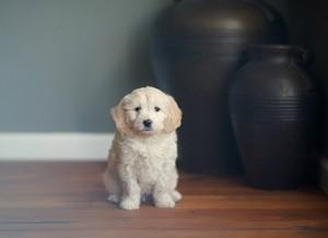 illnesses puppies
