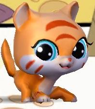 オレンジ kitty