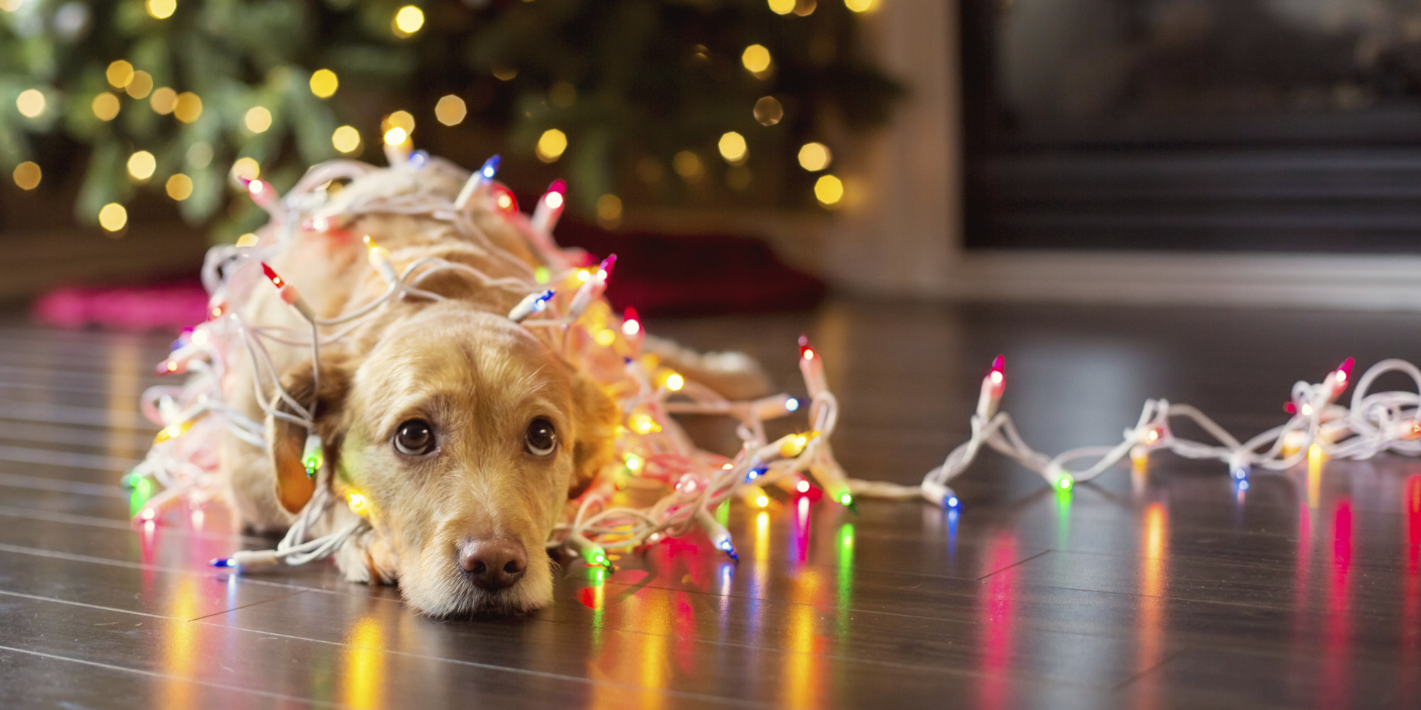 christmas images christmas dog hd wallpaper and background photos