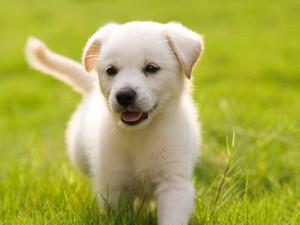 puppy 3143 7cfb4d6a42dfc7d9d1ae7e23126279e8 1x