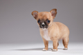 shutterstock 142887520 - puppies photo