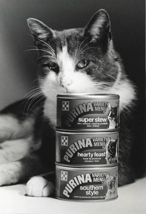 A Vintage Promo Ad For Purina Cat Chow