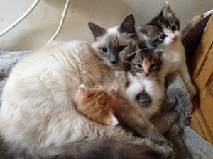 Cat And Its Kittens
