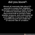 Completely Serious Science Fact