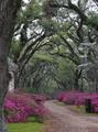 Louisiana  - united-states-of-america photo