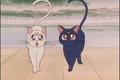 Luna and Artamas  - sailor-moon photo