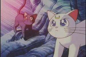 Luna and Atrmas