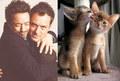 Male Celebrity vs. Cat 11 - cats photo