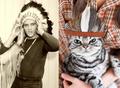 Male Celebrity vs. Cat 32 - cats photo