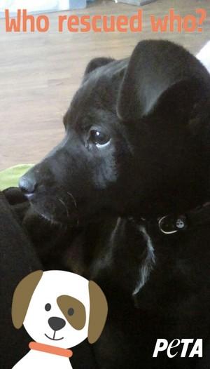 My puppy, Brody