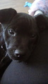 My puppy, Brody - fanpop-pets photo