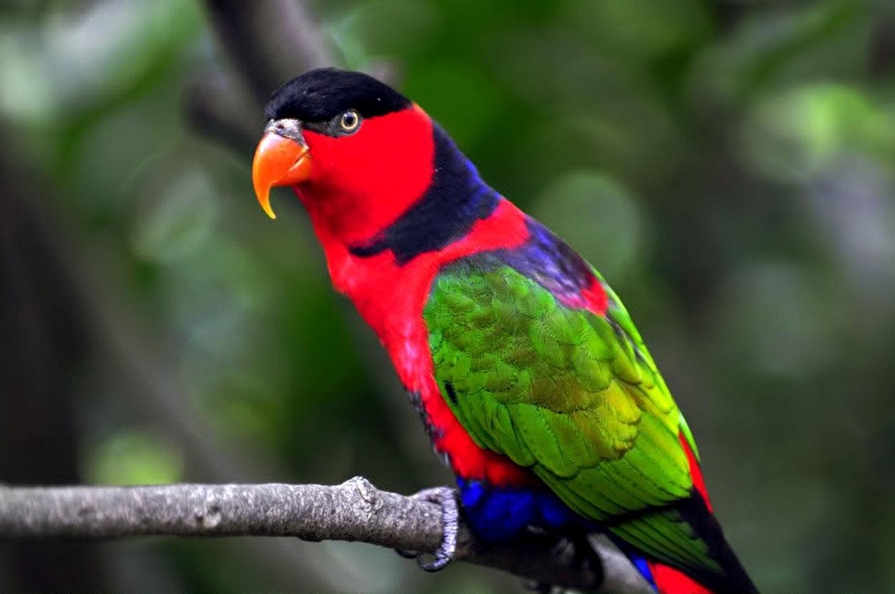 Parrots images parrot hd wallpaper and background photos 40931457 parrots images parrot hd wallpaper and background photos voltagebd Images
